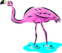 image Animals Flamingo