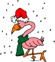 image Animals Flamingo Weather Winter