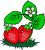 image  Plants Strawberries