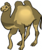 image  Animals Camels